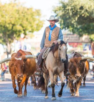 "<a href=""https://fortworthstockyards.com/the-herd/"" target=""_blank"">Fort Worth Herd</>"